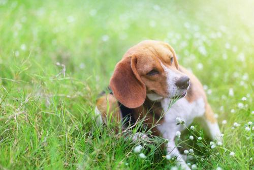 愛犬にお米を与える場合、穀物アレルギーなどは大丈夫?