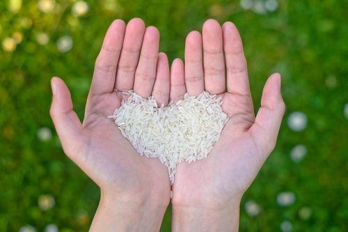 愛犬が食べやすいお米