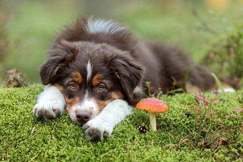 犬がきのこを食べるメリットと栄養素は?
