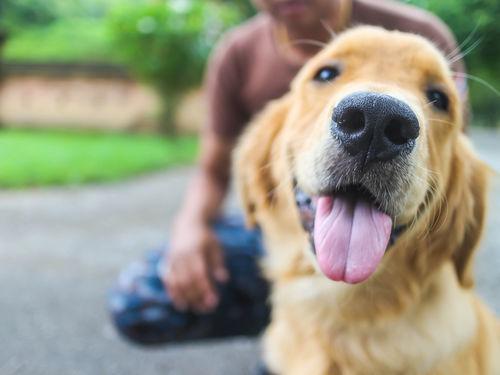 愛犬が健康に楽しく過ごす
