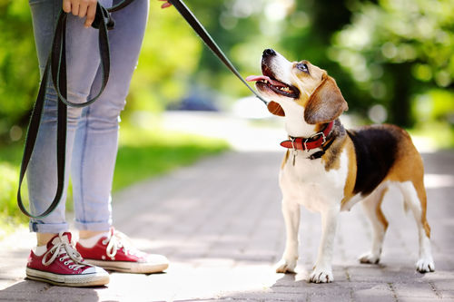 愛犬との楽しい毎日