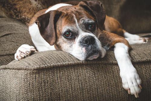 市販の犬用ゼリーは老犬や食欲不振の犬におすすめ!