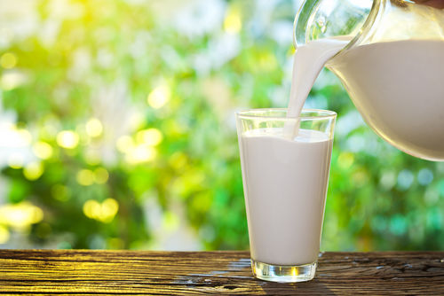 【獣医師監修】犬に人間用の牛乳を飲ませちゃダメって本当!?牛乳に関する正しい知識!