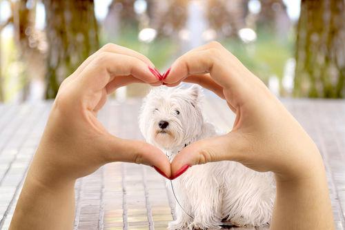 愛犬 健康 飼い主