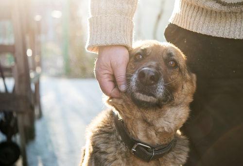 愛犬の健康を守れるのは飼い主だけ