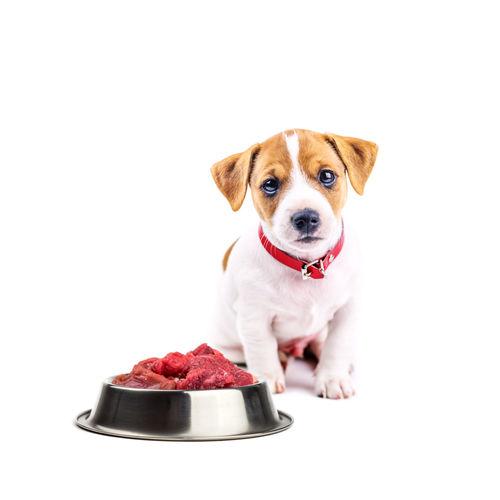 愛犬に与える「生肉」のまとめ