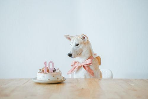 犬がケーキを食べても大丈夫なの?気になるカロリーは?