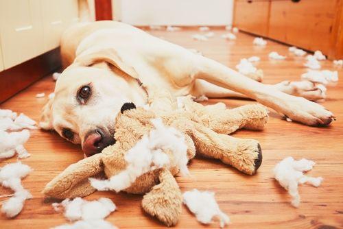 おもちゃを噛みちぎる犬