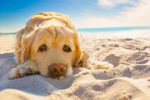 愛犬との長く楽しい生活