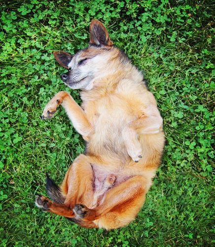 犬の乳腺癌