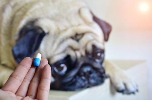 犬の歯の「内側」の原因②【薬物の影響】