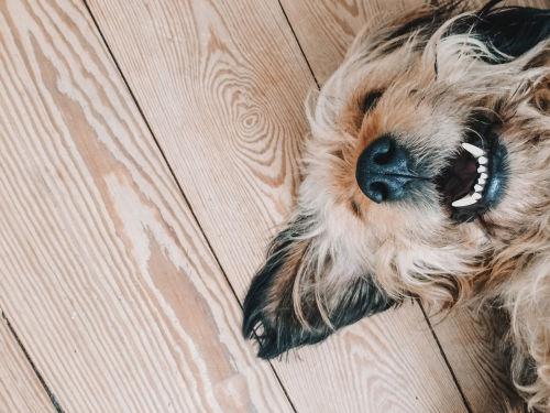 犬の歯髄壊死