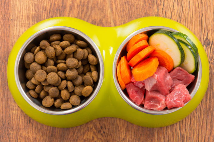 犬に必要な栄養素は人間と違う?