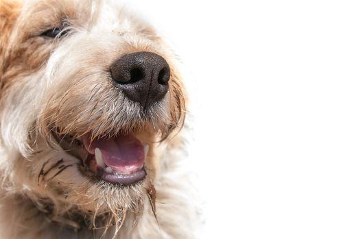 犬の口内炎