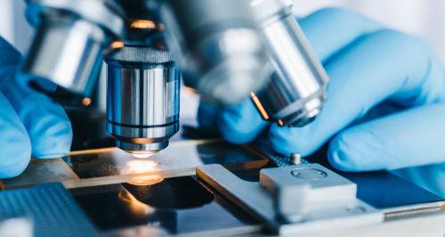 犬のしこりの細胞診検査