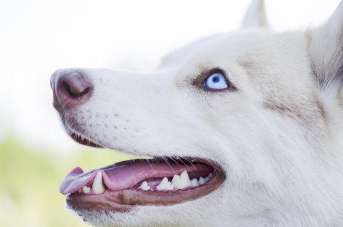 【獣医師監修】犬の歯が折れた・欠けた。考えられる原因や症状、おもな病気は?