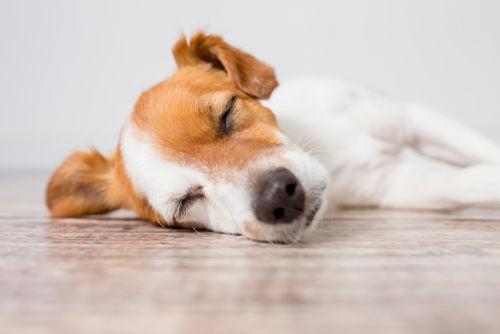 犬の慢性腎不全