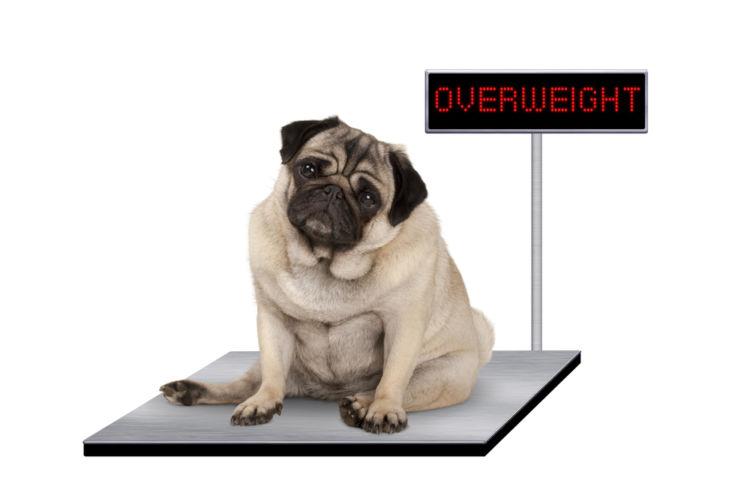 肥満が懸念される犬の場合