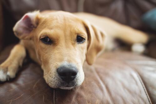 犬が食べ物を吐く場合は、絶食すべき?正しく対処するための3つの見極めポイント