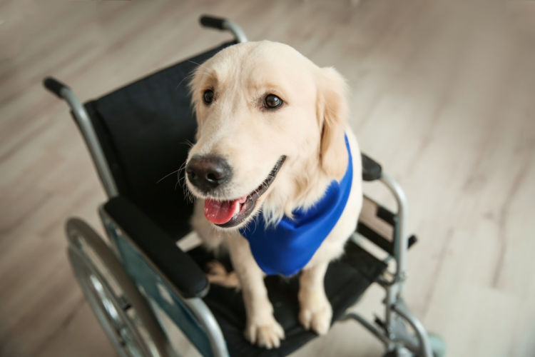 【獣医師監修】犬の下半身が動かない。この症状から考えられる原因や病気は?
