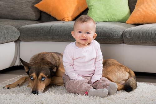 犬が赤ちゃんの口や顔をなめるのは衛生的に大丈夫なのか?