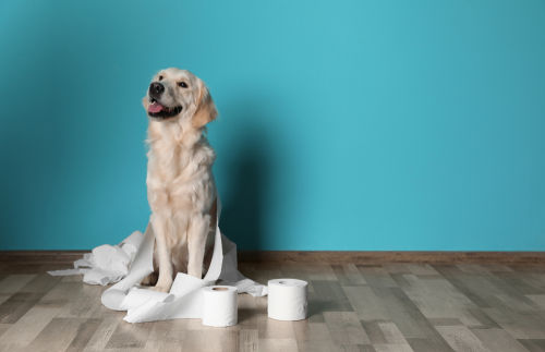 犬のうんち・おならが臭い【この症状で考えられるおもな病気】