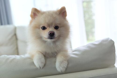 留守番を長時間頑張れる犬にする秘訣
