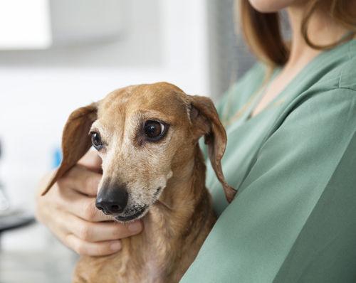 犬が粘液便を出している【この症状で考えられるおもな病気】