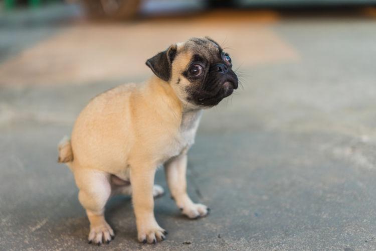 【獣医師監修】犬のうんちが黄色っぽい。この症状から考えられる原因や病気は?