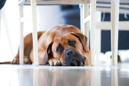 犬のうんちが黄色っぽい【考えられる原因】