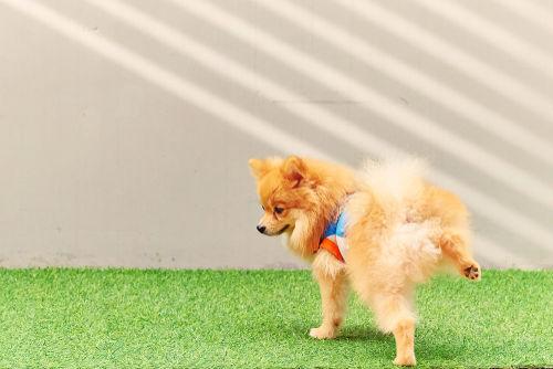 犬の膀胱腫瘍