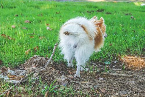 犬の腎性尿糖