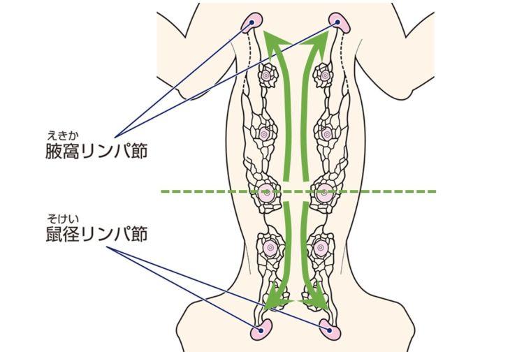 領域リンパ節の診断