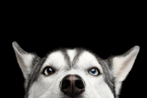 犬の目やには病気のサイン?目やにの色で分かる症状の違いと危険度