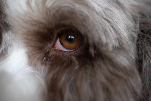 角膜の異常