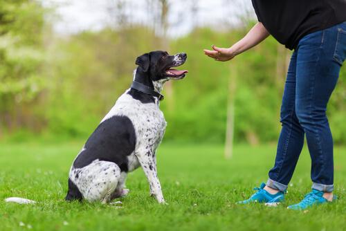 散歩中に犬が草をむしゃむしゃ食べる意外な理由
