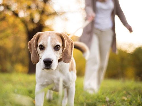 犬の脊髄腫瘍