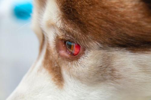 角膜や結膜の炎症