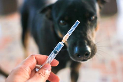ワクチンのアレルギー