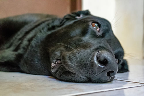 犬の角膜潰瘍