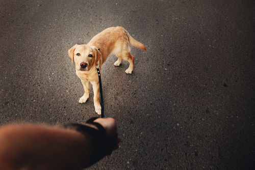 犬の足がしびれている【考えられる原因】