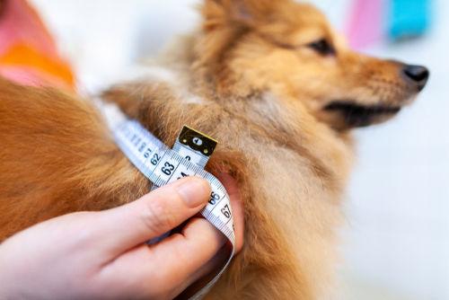 多飲多尿で体重が減ってきた犬