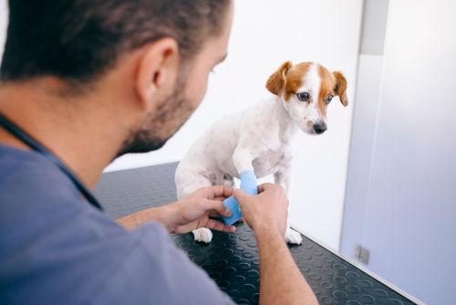 犬の足の診察