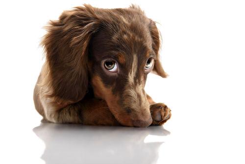 犬の脊髄梗塞