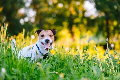 【獣医師監修】犬の逆くしゃみ。この症状から考えられる原因や病気は?