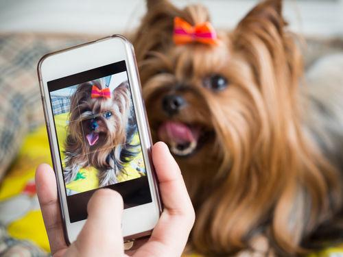 逆くしゃみをする犬を撮影