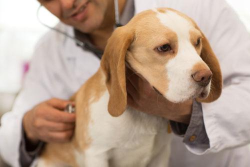 犬が咳をしている【こんな症状は要注意!】