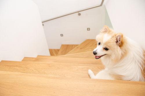 犬が階段を避ける【こんな場合は要注意!】