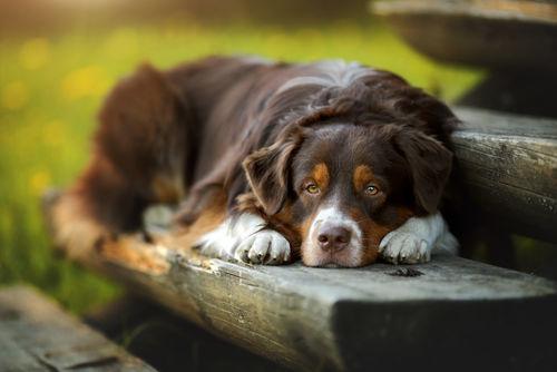 犬の変形性関節症