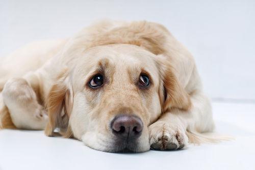 犬の下半身が動かない【考えられる原因】